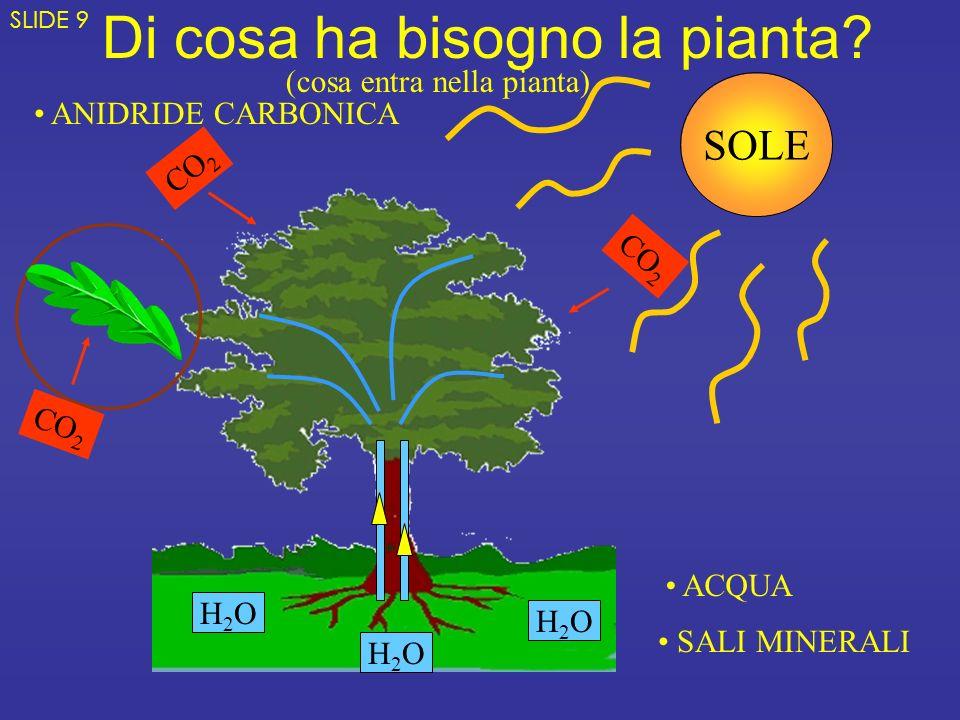 Di cosa ha bisogno la pianta? H2OH2O H2OH2O H2OH2O ACQUA SALI MINERALI ANIDRIDE CARBONICA CO 2 SOLE (cosa entra nella pianta) SLIDE 9