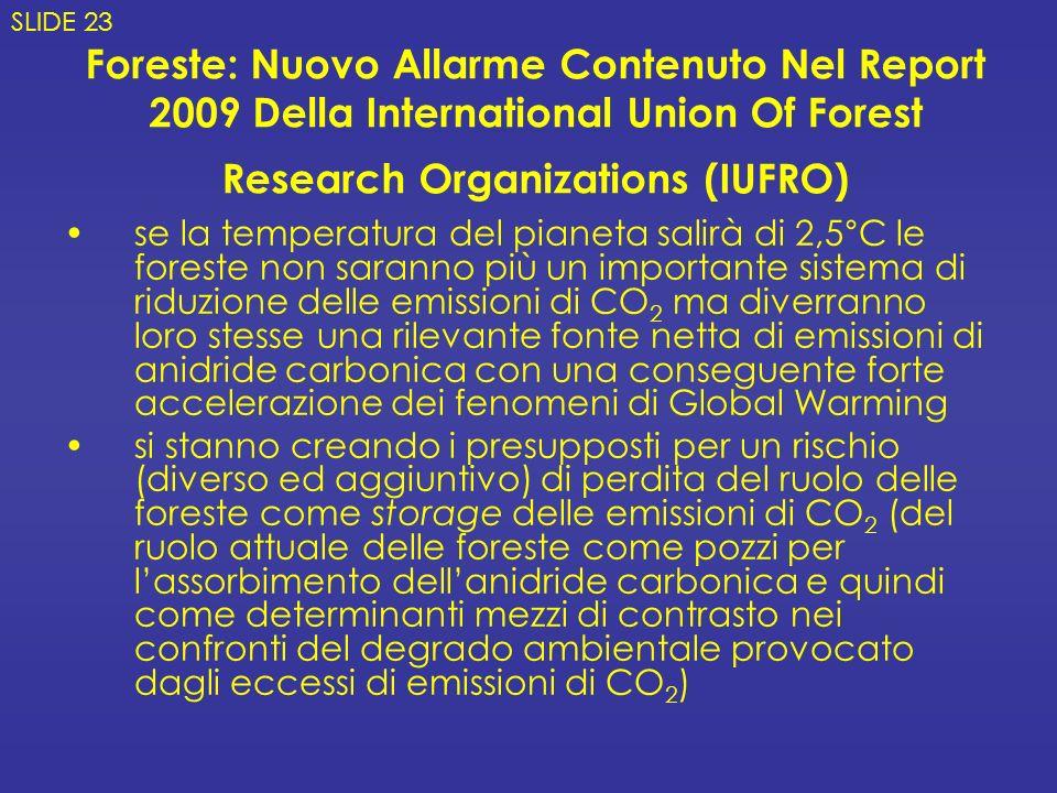 Foreste: Nuovo Allarme Contenuto Nel Report 2009 Della International Union Of Forest Research Organizations (IUFRO) se la temperatura del pianeta sali