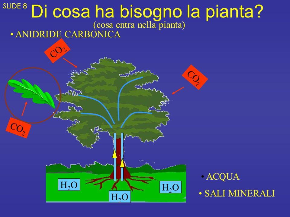 Di cosa ha bisogno la pianta? H2OH2O H2OH2O H2OH2O ACQUA SALI MINERALI ANIDRIDE CARBONICA CO 2 (cosa entra nella pianta) SLIDE 8
