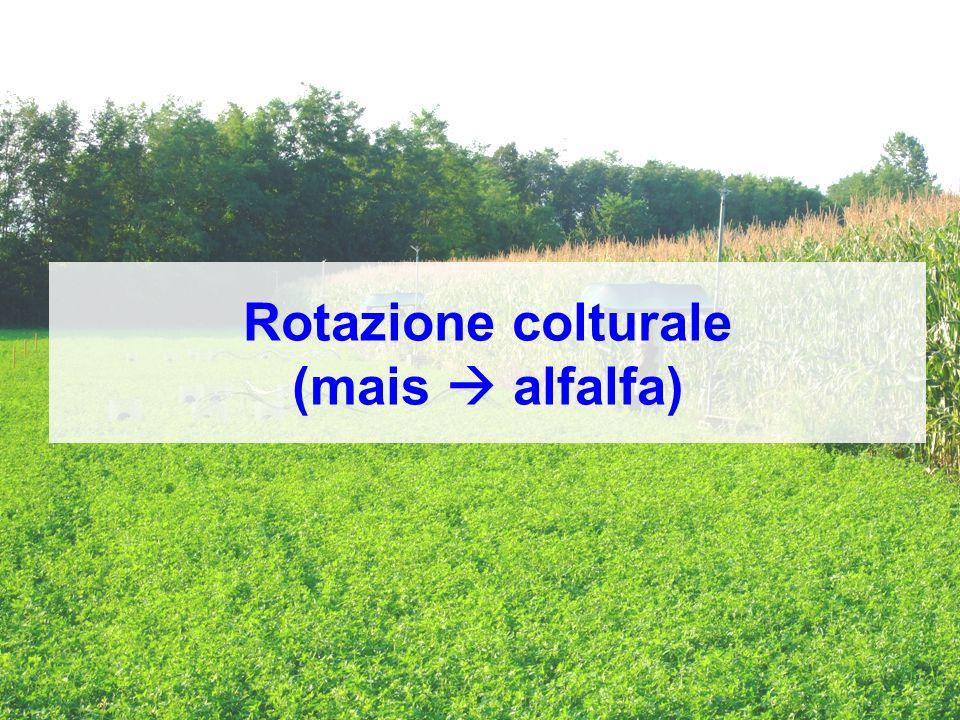 Rotazione colturale (mais alfalfa)