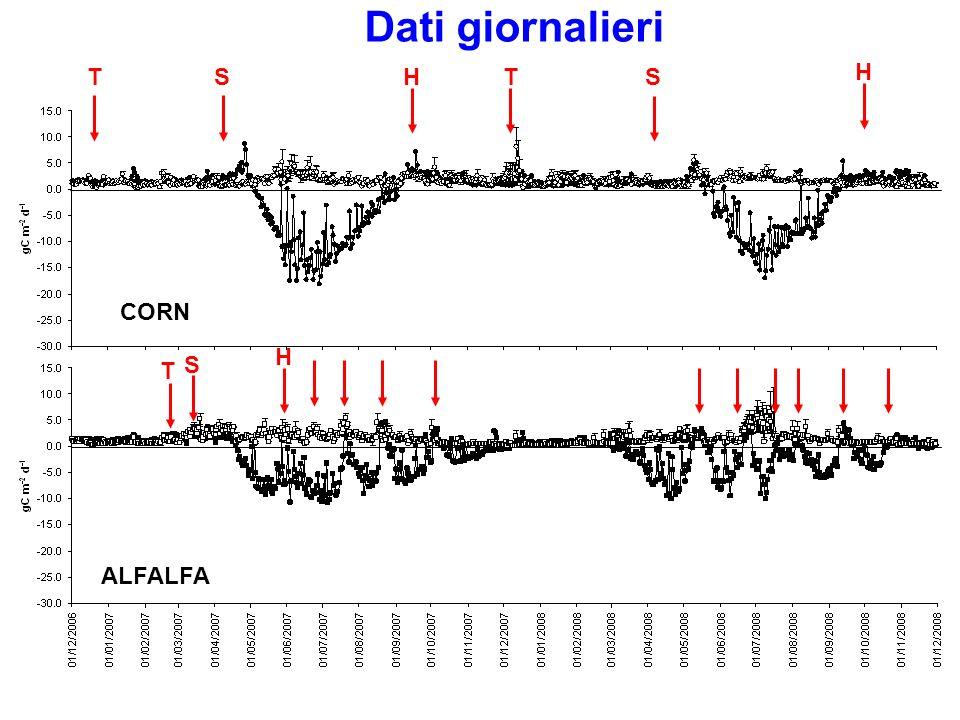 CORN NEEALFALFA NEE μmol C m -2 s -1