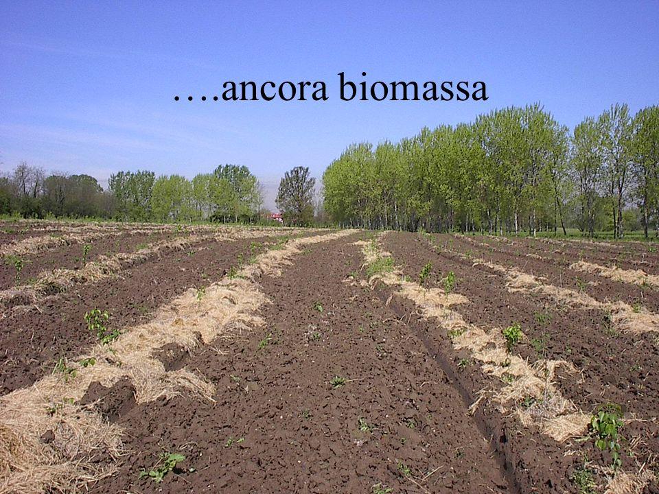 ….ancora biomassa
