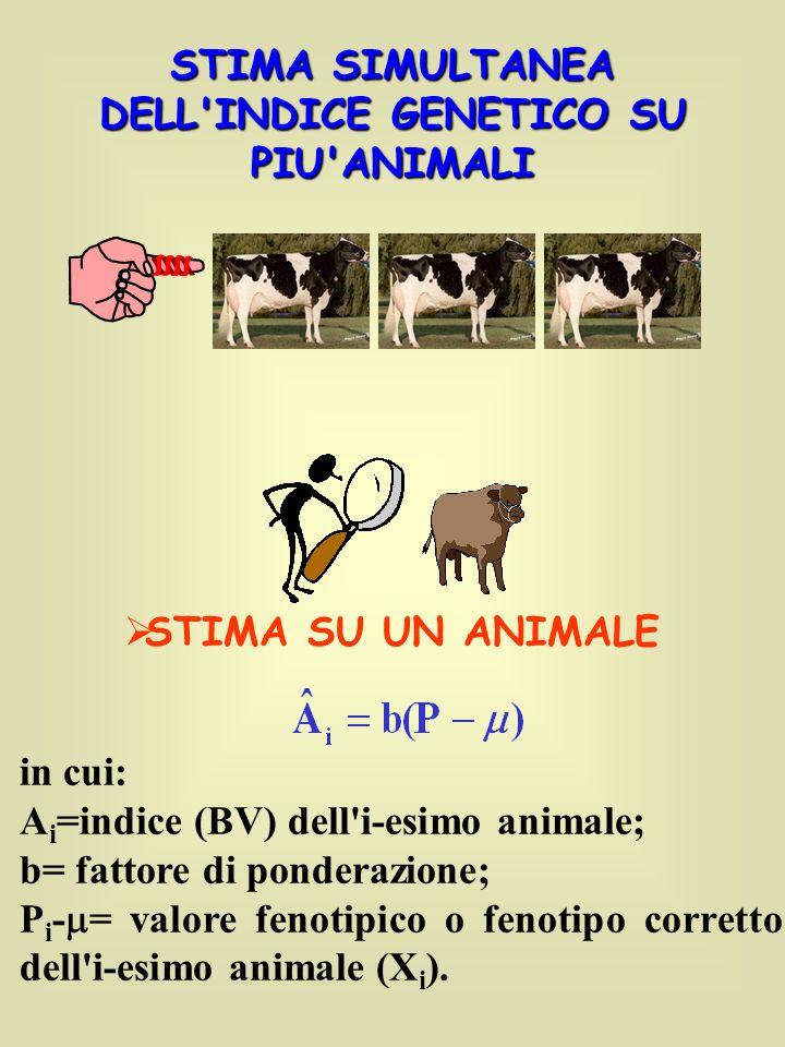 STIMA SIMULTANEA DELL INDICE GENETICO SU PIU ANIMALI STIMA SU UN ANIMALE in cui: A i =indice (BV) dell i-esimo animale; b= fattore di ponderazione; P i - = valore fenotipico o fenotipo corretto dell i-esimo animale (X i ).