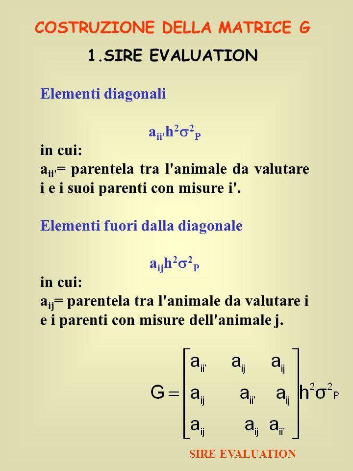 COSTRUZIONE DELLA MATRICE G 1.SIRE EVALUATION Elementi diagonali a ii' h 2 2 P in cui: a ii' = parentela tra l'animale da valutare i e i suoi parenti