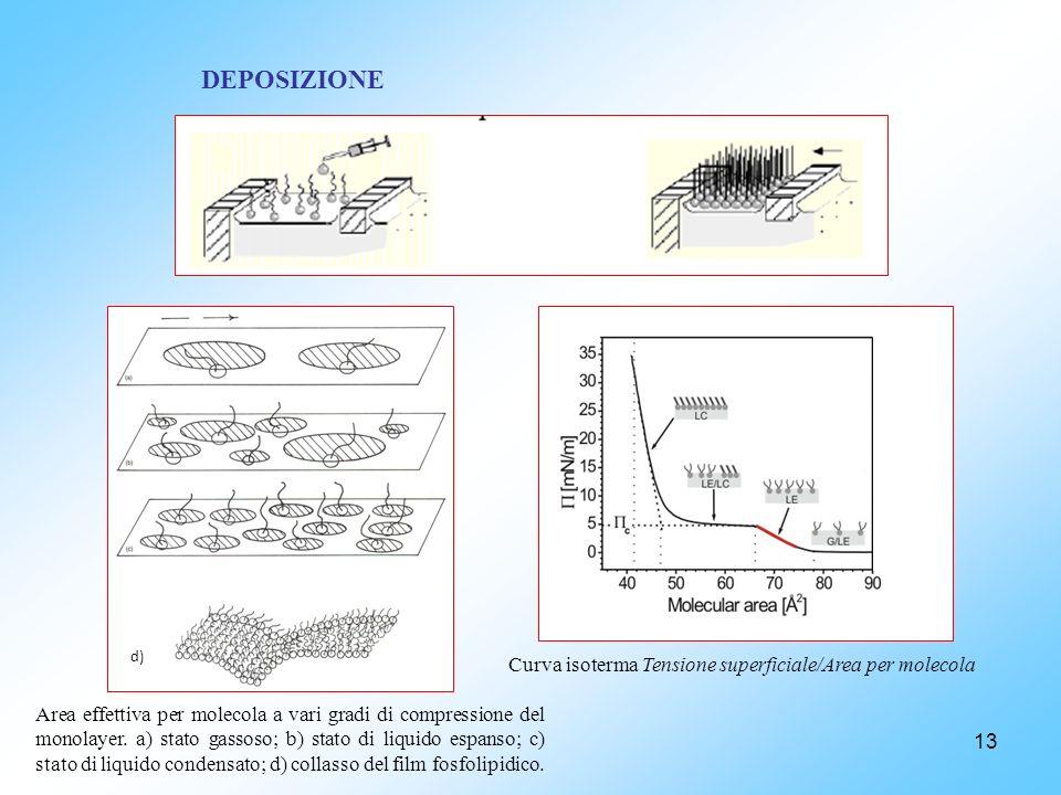 13 DEPOSIZIONE d) Area effettiva per molecola a vari gradi di compressione del monolayer. a) stato gassoso; b) stato di liquido espanso; c) stato di l