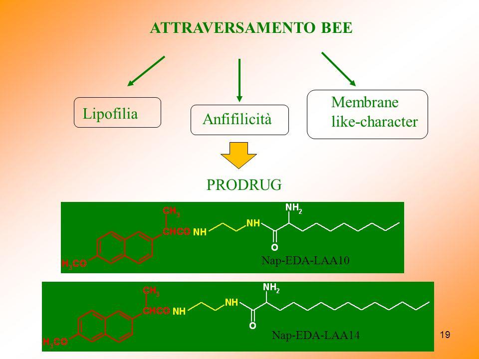 19 ATTRAVERSAMENTO BEE PRODRUG Lipofilia Anfifilicità Membrane like-character Nap-EDA-LAA10 Nap-EDA-LAA14