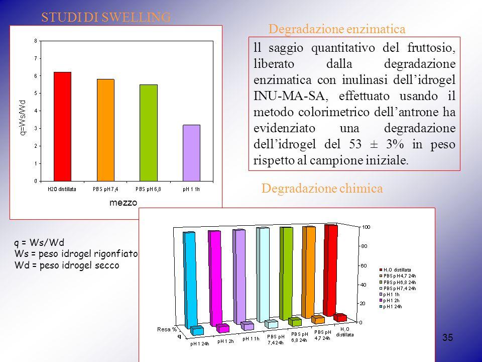 35 mezzo STUDI DI SWELLING q = Ws/Wd Ws = peso idrogel rigonfiato Wd = peso idrogel secco Degradazione chimica ll saggio quantitativo del fruttosio, liberato dalla degradazione enzimatica con inulinasi dellidrogel INU-MA-SA, effettuato usando il metodo colorimetrico dellantrone ha evidenziato una degradazione dellidrogel del 53 ± 3% in peso rispetto al campione iniziale.