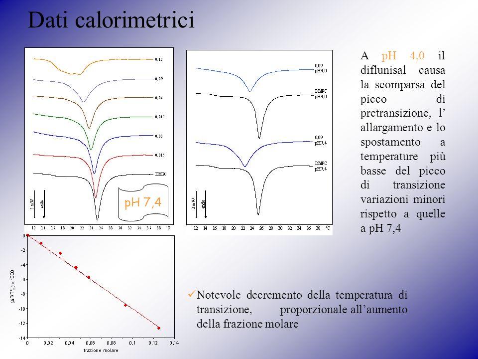 Dati calorimetrici pH 7,4 Notevole decremento della temperatura di transizione, proporzionale allaumento della frazione molare A pH 4,0 il diflunisal causa la scomparsa del picco di pretransizione, l allargamento e lo spostamento a temperature più basse del picco di transizione variazioni minori rispetto a quelle a pH 7,4
