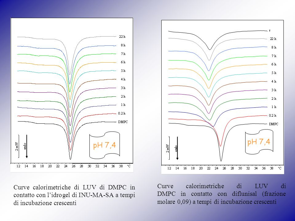 Curve calorimetriche di LUV di DMPC in contatto con lidrogel di INU-MA-SA a tempi di incubazione crescenti pH 7,4 Curve calorimetriche di LUV di DMPC in contatto con diflunisal (frazione molare 0,09) a tempi di incubazione crescenti