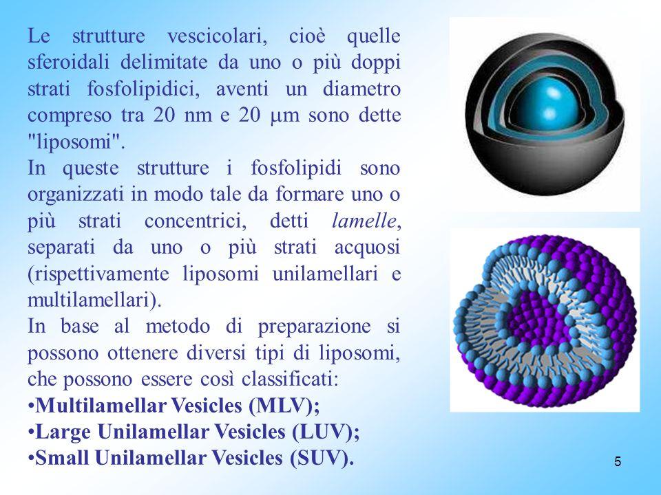 5 Le strutture vescicolari, cioè quelle sferoidali delimitate da uno o più doppi strati fosfolipidici, aventi un diametro compreso tra 20 nm e 20 m sono dette liposomi .