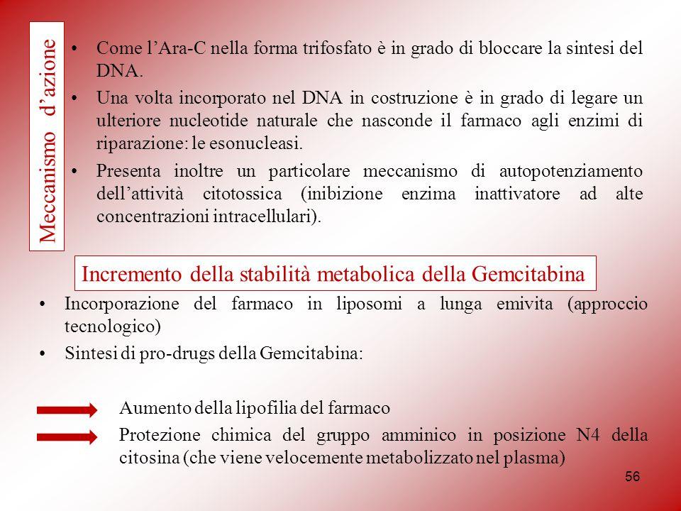 56 Come lAra-C nella forma trifosfato è in grado di bloccare la sintesi del DNA. Una volta incorporato nel DNA in costruzione è in grado di legare un