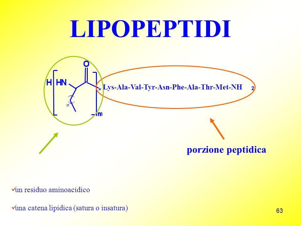 63 LIPOPEPTIDI m porzione peptidica un residuo aminoacidico una catena lipidica (satura o insatura) * H HN O n Lys-Ala-Val-Tyr-Asn-Phe-Ala-Thr-Met-NH 2