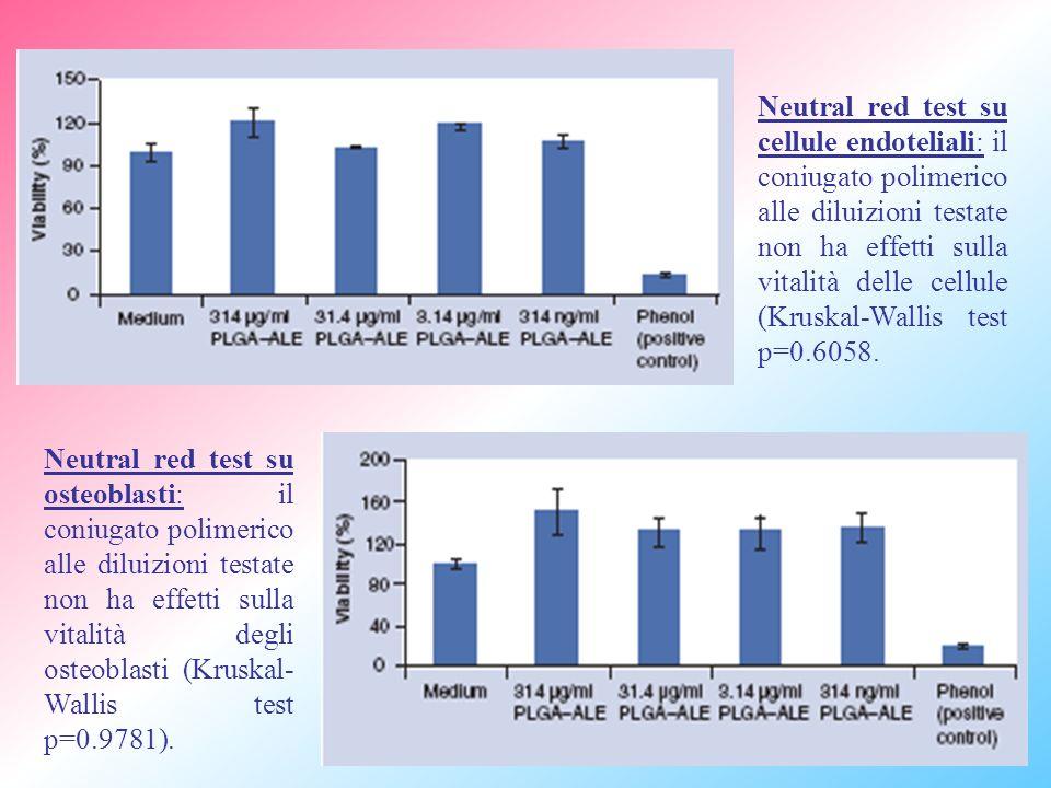 Neutral red test su cellule endoteliali: il coniugato polimerico alle diluizioni testate non ha effetti sulla vitalità delle cellule (Kruskal-Wallis test p=0.6058.