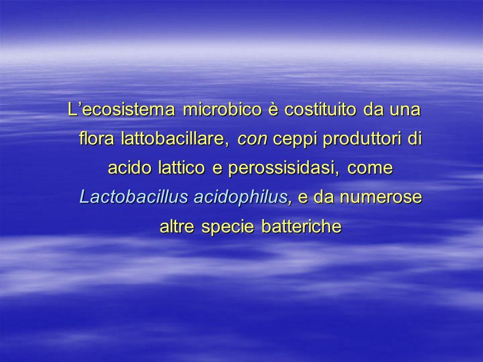 Lecosistema microbico è costituito da una flora lattobacillare, con ceppi produttori di acido lattico e perossisidasi, come Lactobacillus acidophilus,