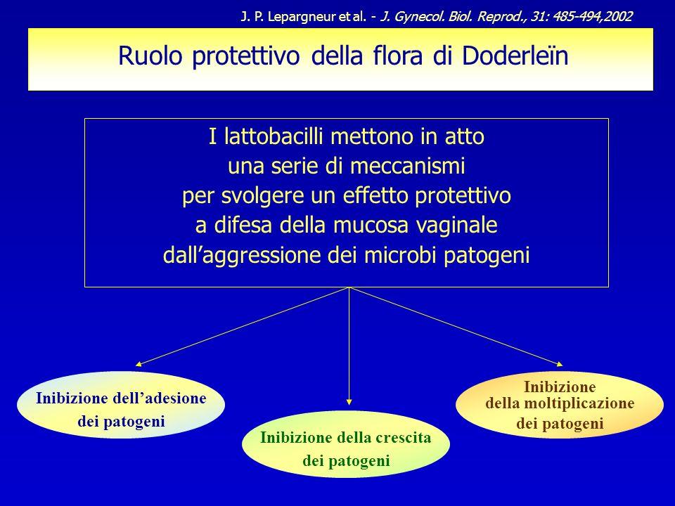 Ruolo protettivo della flora di Doderleïn I lattobacilli mettono in atto una serie di meccanismi per svolgere un effetto protettivo a difesa della muc