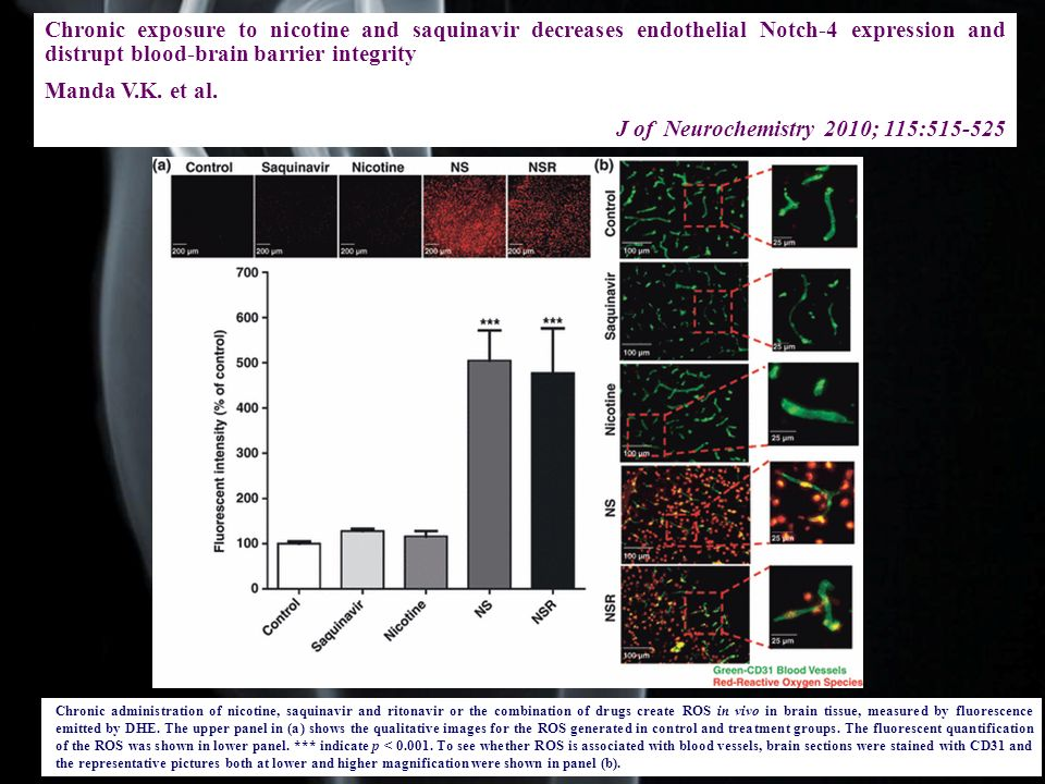 Chronic exposure to nicotine and saquinavir decreases endothelial Notch-4 expression and distrupt blood-brain barrier integrity Manda V.K. et al. J of