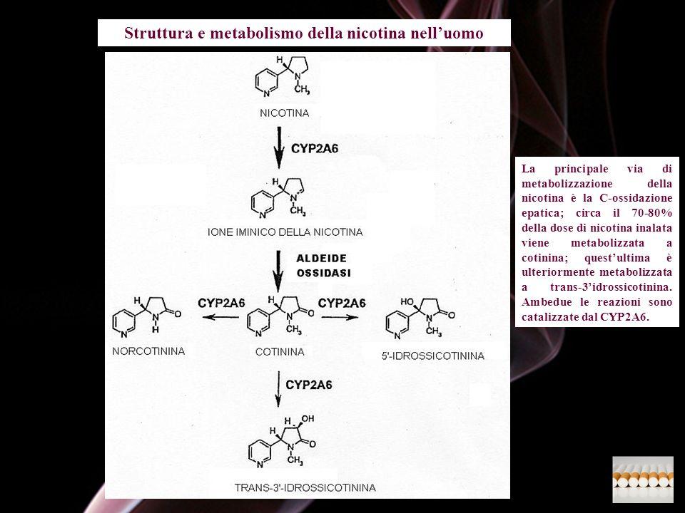 Struttura e metabolismo della nicotina nelluomo La principale via di metabolizzazione della nicotina è la C-ossidazione epatica; circa il 70-80% della