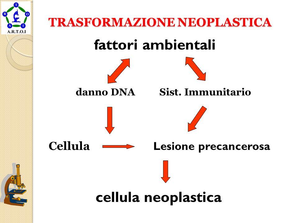 TRASFORMAZIONE NEOPLASTICA TRASFORMAZIONE NEOPLASTICA fattori ambientali danno DNA Sist. Immunitario Cellula Lesione precancerosa cellula neoplastica