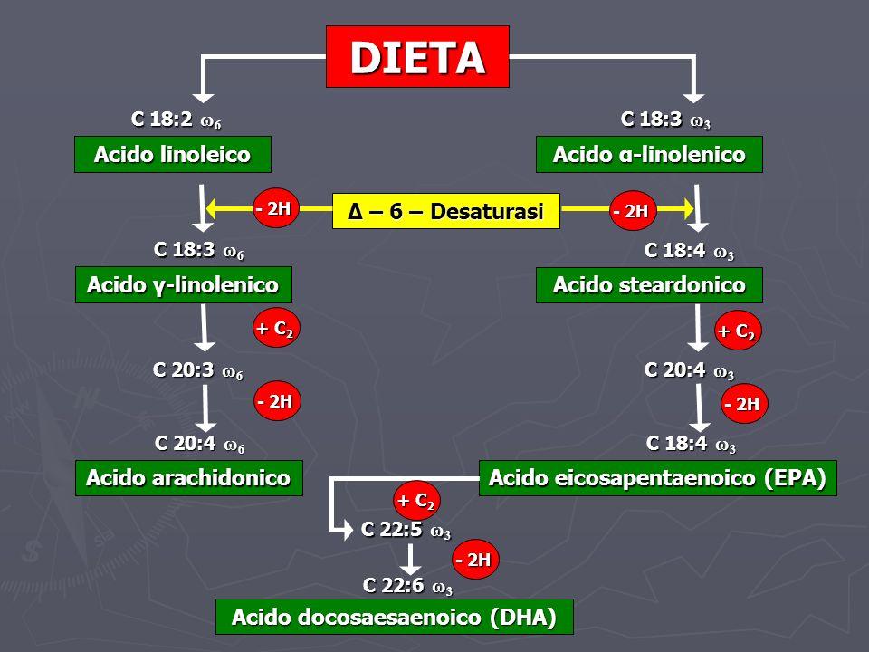 DIETA Acido linoleico C 18:2 ω 6 Acido α-linolenico C 18:3 ω 3 Acido γ-linolenico C 18:3 ω 6 Acido steardonico C 18:4 ω 3 C 20:3 ω 6 C 20:4 ω 3 Acido