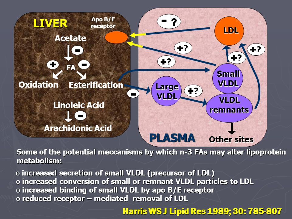 Acetate FA Oxidation Esterification Linoleic Acid Arachidonic Acid Apo B/E receptor LDL Other sites LIVER PLASMA Large VLDL Small VLDL VLDL remnants S