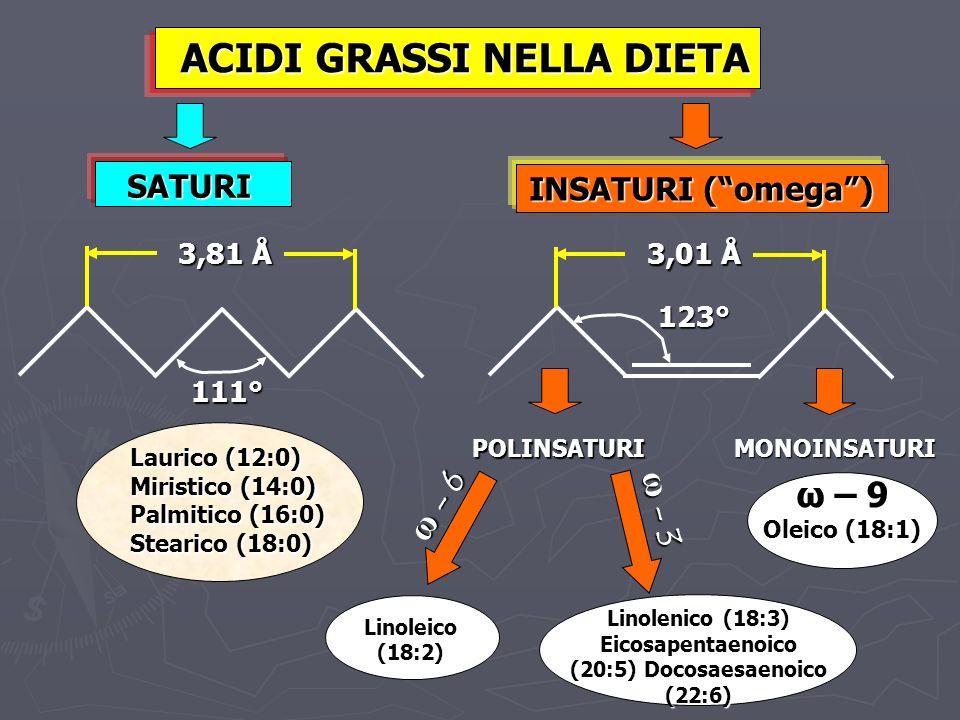ACIDI GRASSI NELLA DIETA INSATURI (omega) SATURI 3,81 Å 111° 123° 3,01 Å Laurico (12:0) Miristico (14:0) Palmitico (16:0) Stearico (18:0) MONOINSATURI