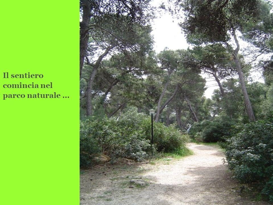 Il sentiero comincia nel parco naturale …