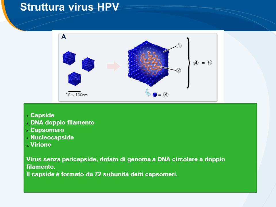Struttura virus HPV 1. Capside 2. DNA doppio filamento 3.