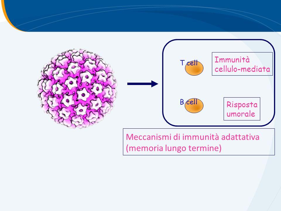 Meccanismi di immunità adattativa (memoria lungo termine) T cell B cell Immunità cellulo-mediata Risposta umorale