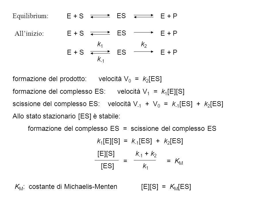 formazione del prodotto: velocità V 0 = k 2 [ES] formazione del complesso ES: velocità V 1 = k 1 [E][S] scissione del complesso ES: velocità V -1 + V