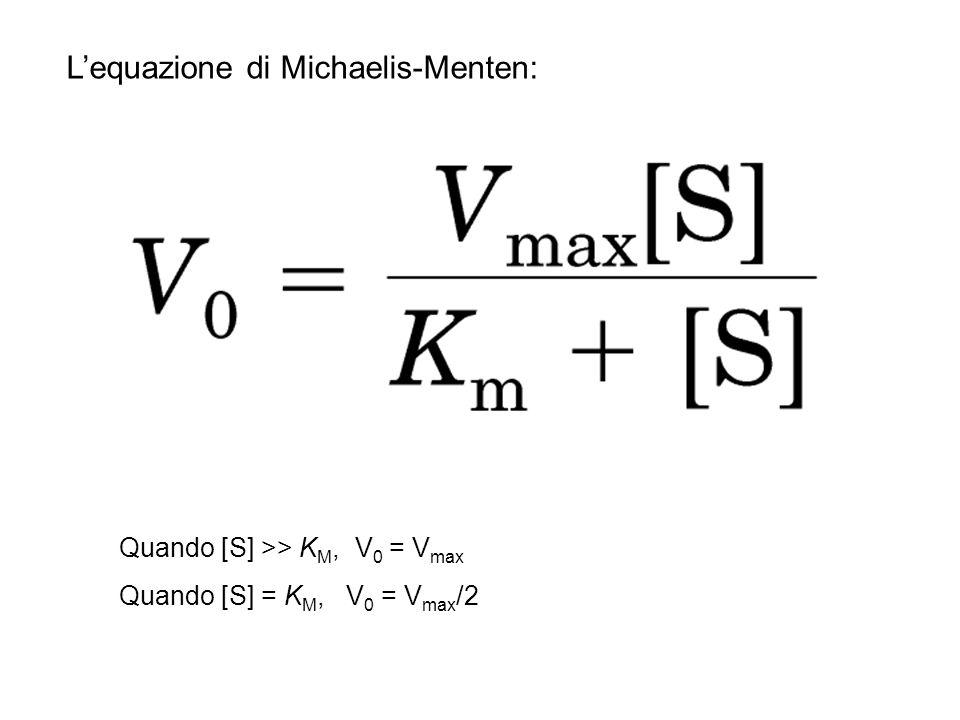 Lequazione di Michaelis-Menten: Quando [S] >> K M, V 0 = V max Quando [S] = K M, V 0 = V max /2