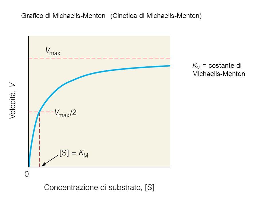 Grafico di Michaelis-Menten (Cinetica di Michaelis-Menten) K M = costante di Michaelis-Menten