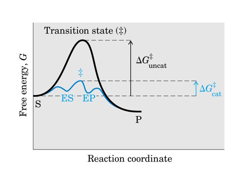 [E][S] = K M [ES] Problema: non conosciamo K M, [E] e [ES] Sappiamo che [E totale ] = [E] + [ES] cioè [E] = [E totale ] – [ES], perciò ([E totale ] – [ES])[S] = K M [ES] [E totale ][S] = K M [ES] + [ES][S] = (K M + [S])[ES] [E totale ][S] (K M + [S]) = [ES] Formazione del prodotto: velocità V 0 = k 2 [ES] k 2 [E totale ][S] (K M + [S]) V 0 = La massima velocità si raggiunge quando tutti i siti catalitici sono saturati con il substrato, cioè quando [E totale ] = [ES] Massima velocità: V max = k 2 [E totale ]