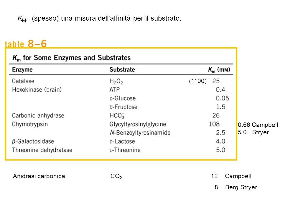 (1100) 0.66 Campbell 5.0 Stryer Anidrasi carbonica CO 2 12 Campbell 8 Berg Stryer K M : (spesso) una misura dellaffinità per il substrato.