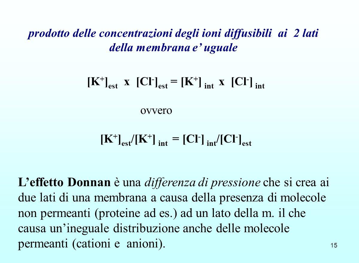 15 prodotto delle concentrazioni degli ioni diffusibili ai 2 lati della membrana e uguale [K + ] est x [Cl - ] est = [K + ] int x [Cl - ] int ovvero [