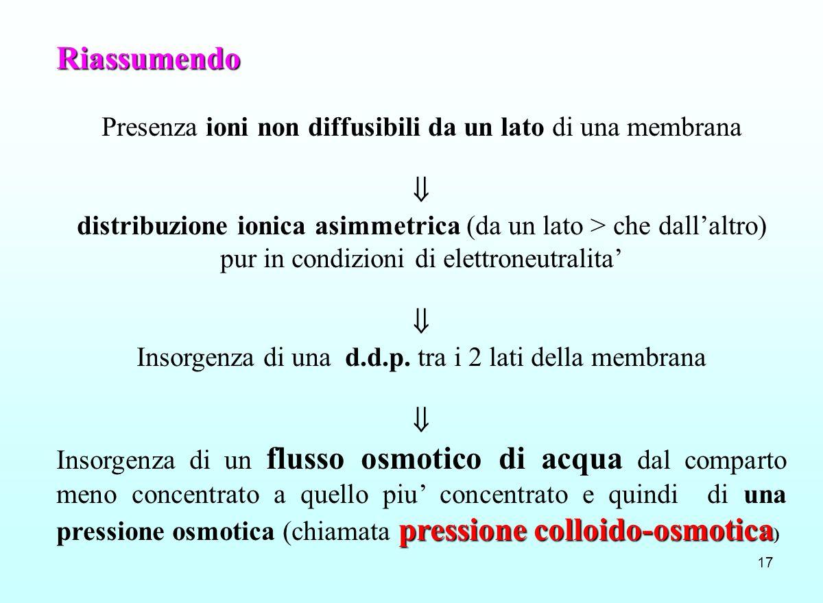 17 Riassumendo Presenza ioni non diffusibili da un lato di una membrana distribuzione ionica asimmetrica (da un lato > che dallaltro) pur in condizion