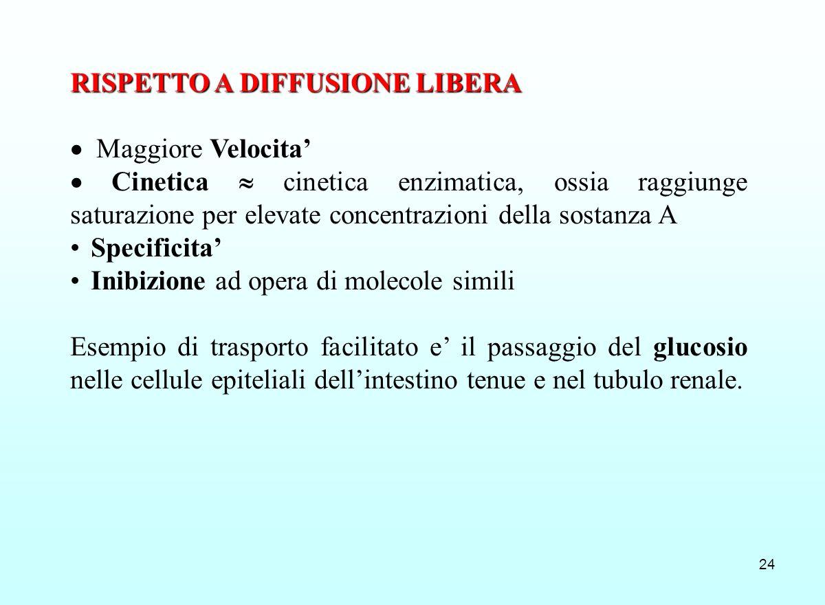 24 RISPETTO A DIFFUSIONE LIBERA Maggiore Velocita Cinetica cinetica enzimatica, ossia raggiunge saturazione per elevate concentrazioni della sostanza