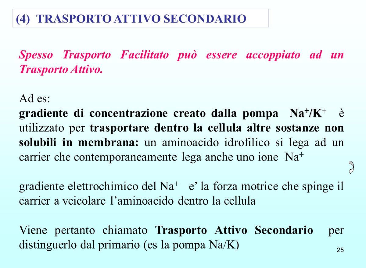 25 Spesso Trasporto Facilitato può essere accoppiato ad un Trasporto Attivo. Ad es: Na + /K + gradiente di concentrazione creato dalla pompa Na + /K +
