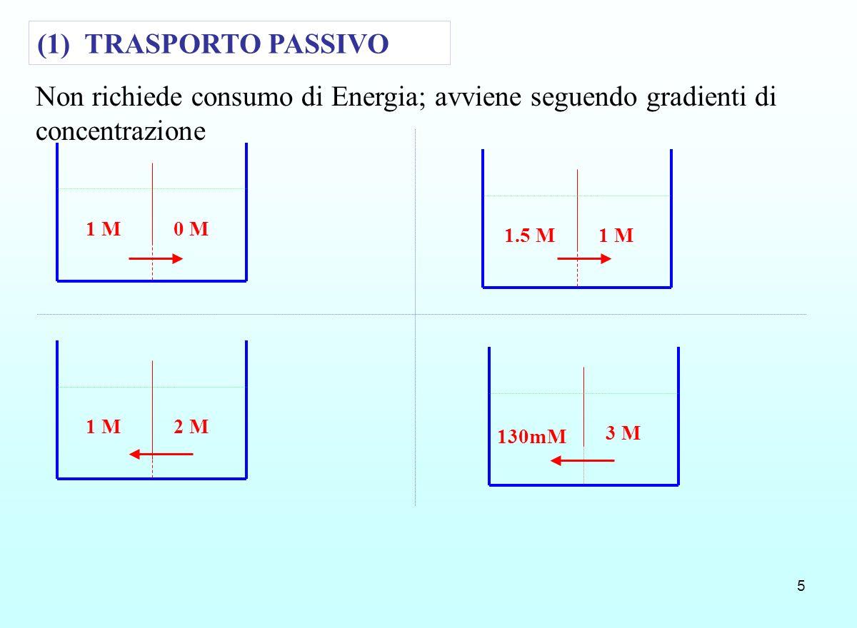 5 0 M1 M 1.5 M 2 M1 M 3 M 130mM (1) TRASPORTO PASSIVO Non richiede consumo di Energia; avviene seguendo gradienti di concentrazione