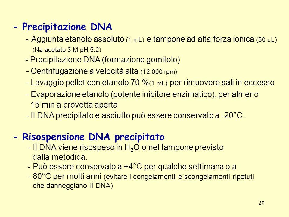 20 - Precipitazione DNA - Aggiunta etanolo assoluto (1 mL) e tampone ad alta forza ionica (50 L ) (Na acetato 3 M pH 5.2) - Precipitazione DNA (formaz