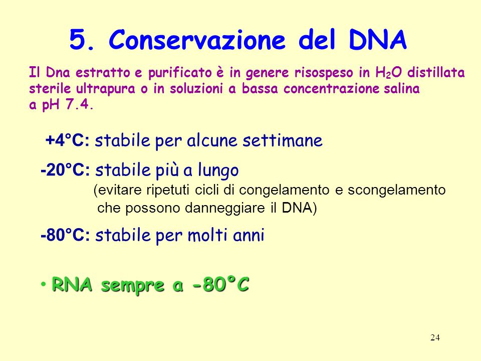 24 5. Conservazione del DNA Il Dna estratto e purificato è in genere risospeso in H 2 O distillata sterile ultrapura o in soluzioni a bassa concentraz