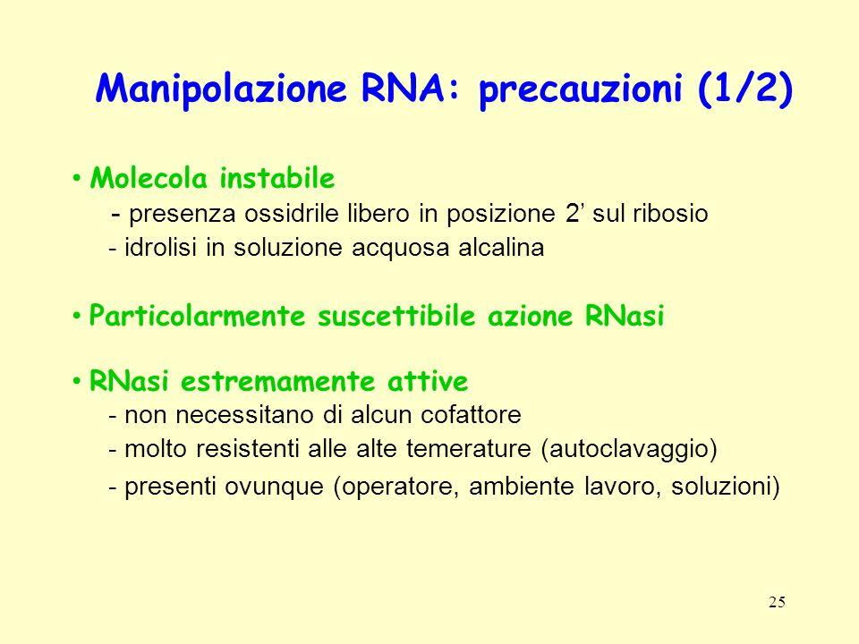 25 Manipolazione RNA: precauzioni (1/2) Molecola instabile - presenza ossidrile libero in posizione 2 sul ribosio - idrolisi in soluzione acquosa alca