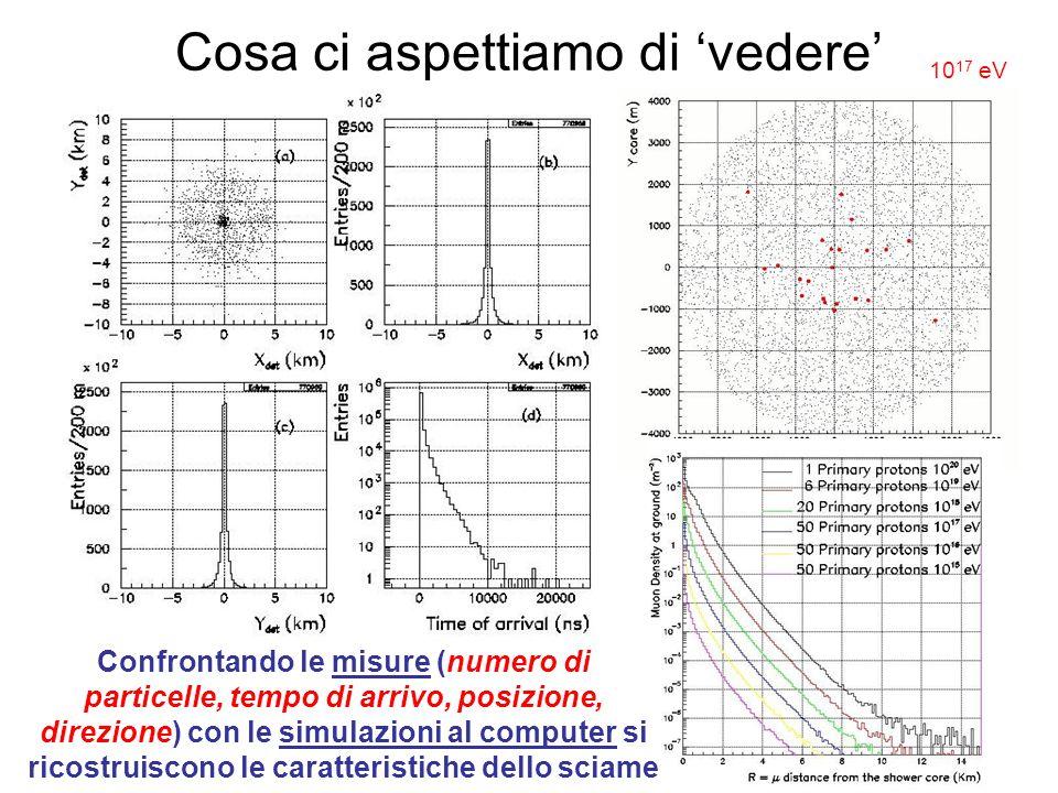 Cosa ci aspettiamo di vedere Confrontando le misure (numero di particelle, tempo di arrivo, posizione, direzione) con le simulazioni al computer si ri