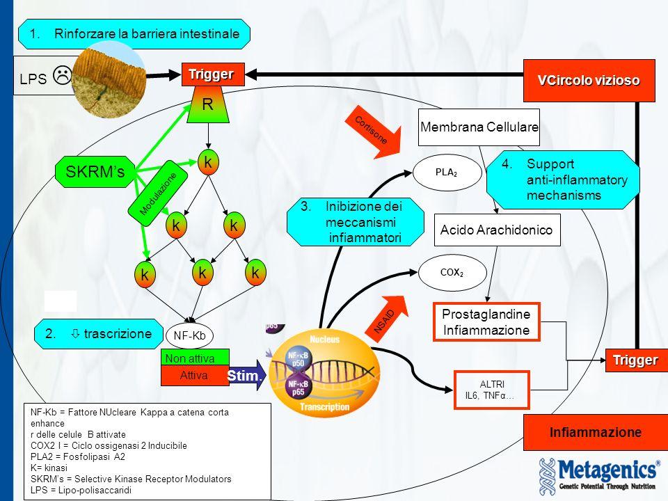 8 Membrana Cellulare Acido Arachidonico Prostaglandine Infiammazione ALTRI IL6, TNFα… Cortisone NSAID R k k kk k SKRMs Modulazione Trigger Trigger NF-