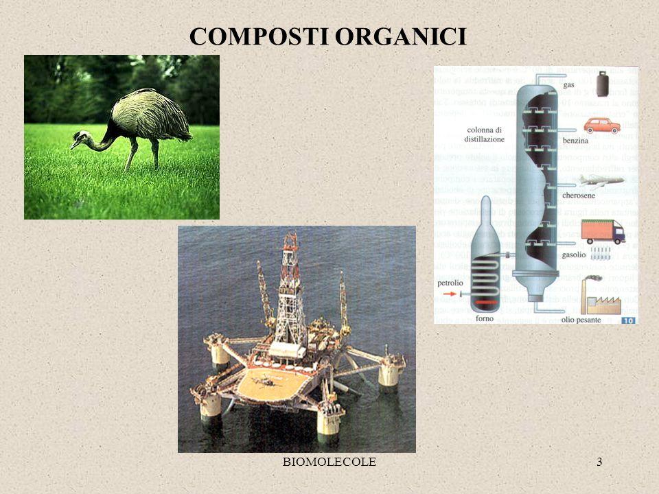 BIOMOLECOLE4 Proteine Carboidrati Lipidi Acidi nucleici Composti organici della materia vivente