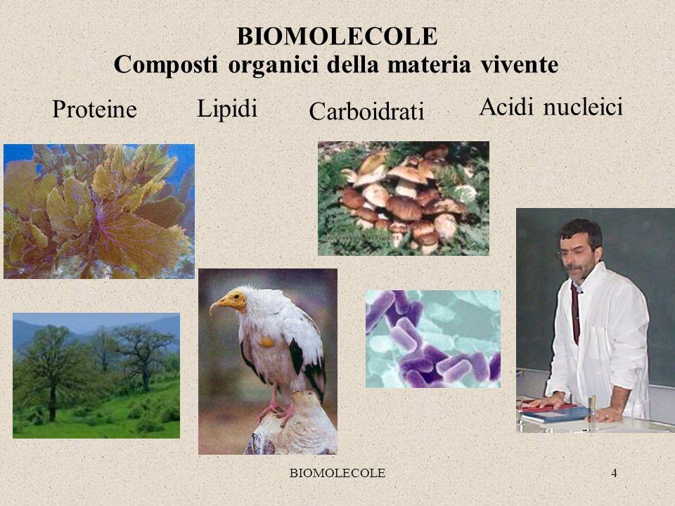 BIOMOLECOLE5 PREFABBRICAZIONE R AO M ROMA AMORRAMO MORAOMAR K B F Z P A BP KBFZPA Monomero (una parte) - anelli singoli Polimero (molte parti) - catena KK KKKKKK