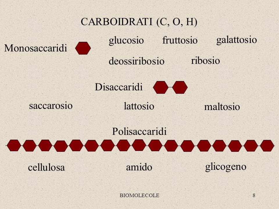 BIOMOLECOLE8 CARBOIDRATI (C, O, H) Monosaccaridi Disaccaridi glucosiofruttosio deossiribosio ribosio galattosio saccarosio lattosio maltosio Polisacca