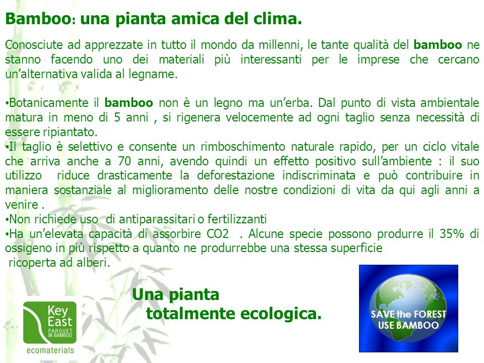 Bamboo : una pianta amica del clima. Conosciute ad apprezzate in tutto il mondo da millenni, le tante qualità del bamboo ne stanno facendo uno dei mat