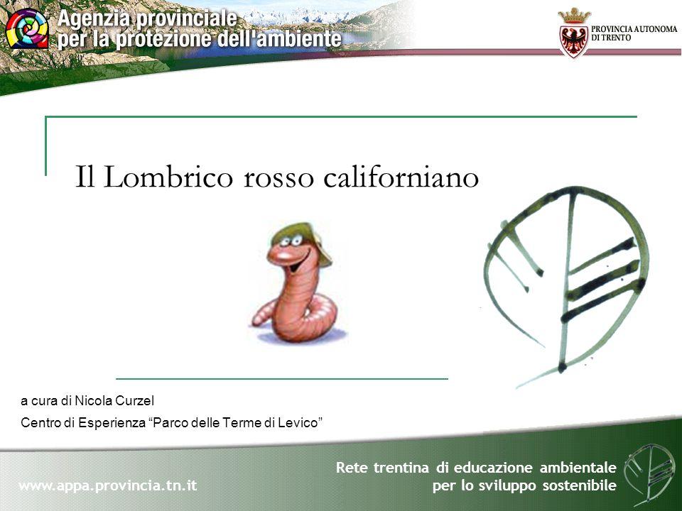Rete trentina di educazione ambientale per lo sviluppo sostenibile www.appa.provincia.tn.it Il lombrico rosso californiano (Lombricus rubellus) è una delle 8.000 specie di lombrichi esistenti sulla terra.