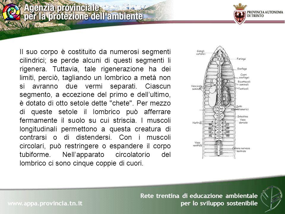 Rete trentina di educazione ambientale per lo sviluppo sostenibile www.appa.provincia.tn.it Il suo corpo è costituito da numerosi segmenti cilindrici;
