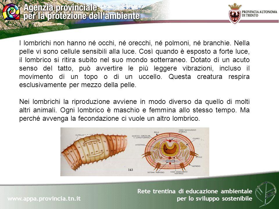 Rete trentina di educazione ambientale per lo sviluppo sostenibile www.appa.provincia.tn.it I lombrichi non hanno né occhi, né orecchi, né polmoni, né